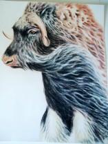 """""""Moskus i vind"""". Fargeblyant 42x50,5 cm."""