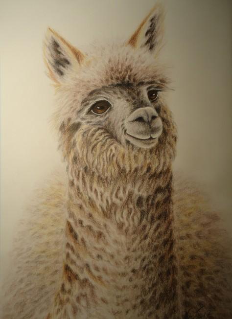 """Alpakka"". Fargeblyant, 55x66 cm."