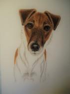 """""""Forventningsfull Issi"""" (Glatthåret fox terrier Nuch Albert Fox's Dame Daisy) fargeblyant, 25x36cm."""
