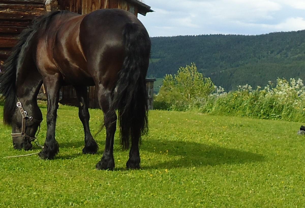 Pilegrimsvandring hest, etappe 20: Oppdal - Rennebu