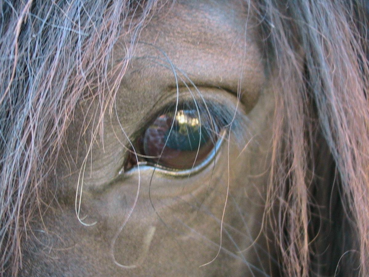Å  arbeide med hest er karakterbyggende