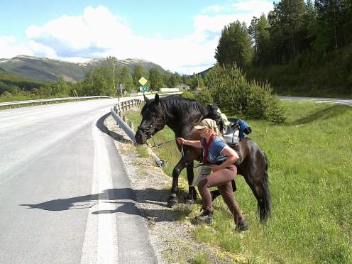 Krysser E6 på Dovreskogen.