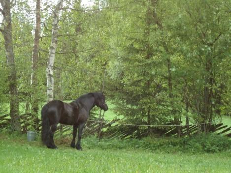 Frøya i løpestreng på Pilegrimsloftet Borkerud.