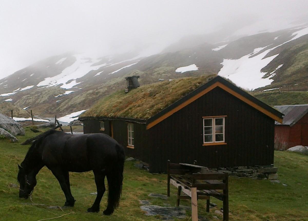 Pilegrimsvandring hest, etappe 17: Kongsvold - Ryphusan