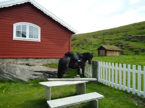 Frøya på Kongsvold fjeldstue.
