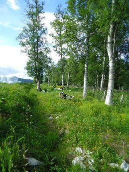 Her ligger Frøya begravet.