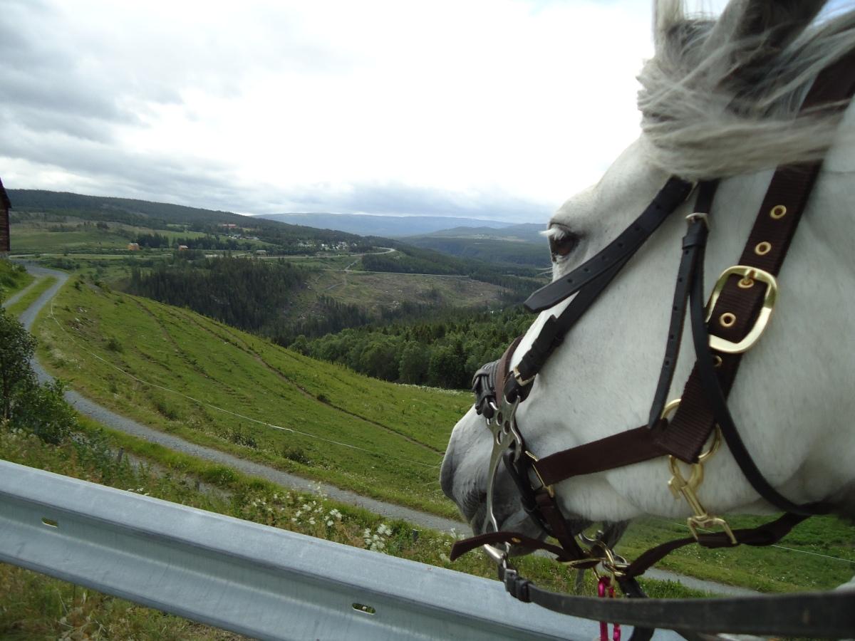 Pilegrimsvandring hest, Etappe 21: Langklopp – Meslo, Rennebu