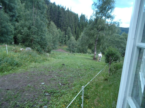 Octhavia får en egen innhegning bak huset på Segard Holel.