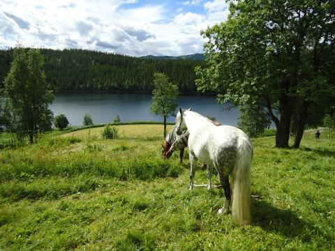 Utsikt over Buvatnet fra hestebeitet på Storbuan.
