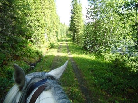 Langs skogsveien fra Storbuan mot Svorkmo.
