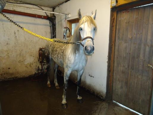 Octhavia får en dusj i vaskespilten.