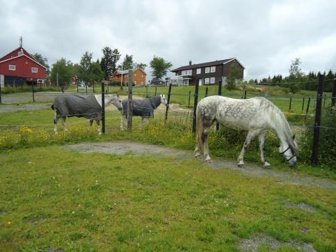 Vådan gård i Tronheim.