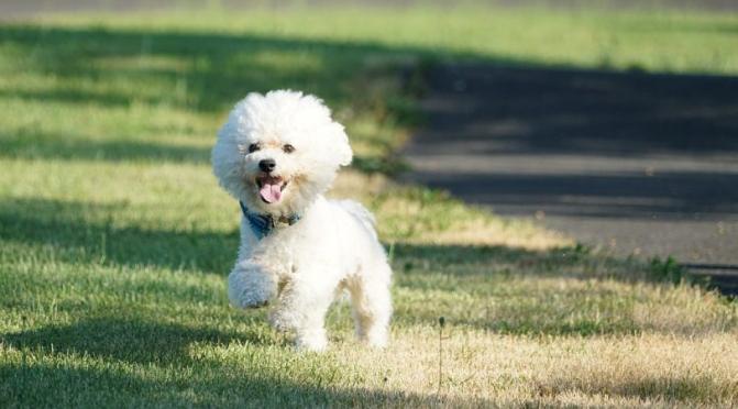 En liten hvit hund på E6