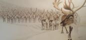 """""""På vegne av oss reinsdyr i Nordfjella, er du nå helt sikker på dette?"""" Panoramakopp"""
