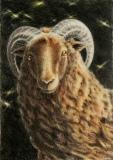 """Syndebukken - eller var det familiens """"svarte"""" får? Fargeblyant, 37 x 52 cm."""