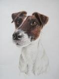 """Pinocchio"" Fox terrier, fargeblyant, 25 x 36 cm."